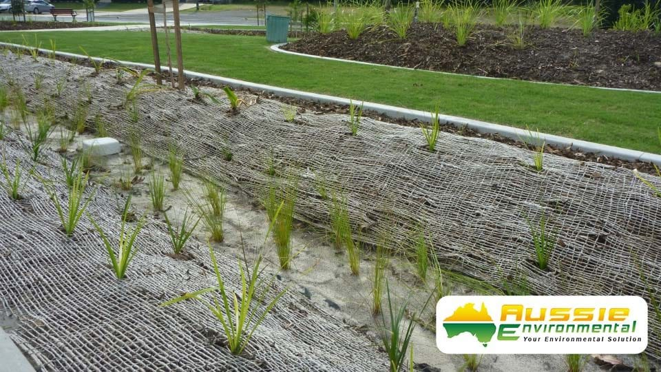 Jute Mesh Installation In Swale Drain with Revegetation