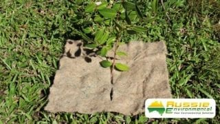 Jute Mat Squares Small with seedling for weed suppression