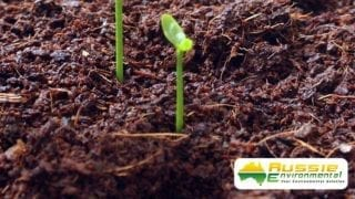 Coir Peat With Seedling
