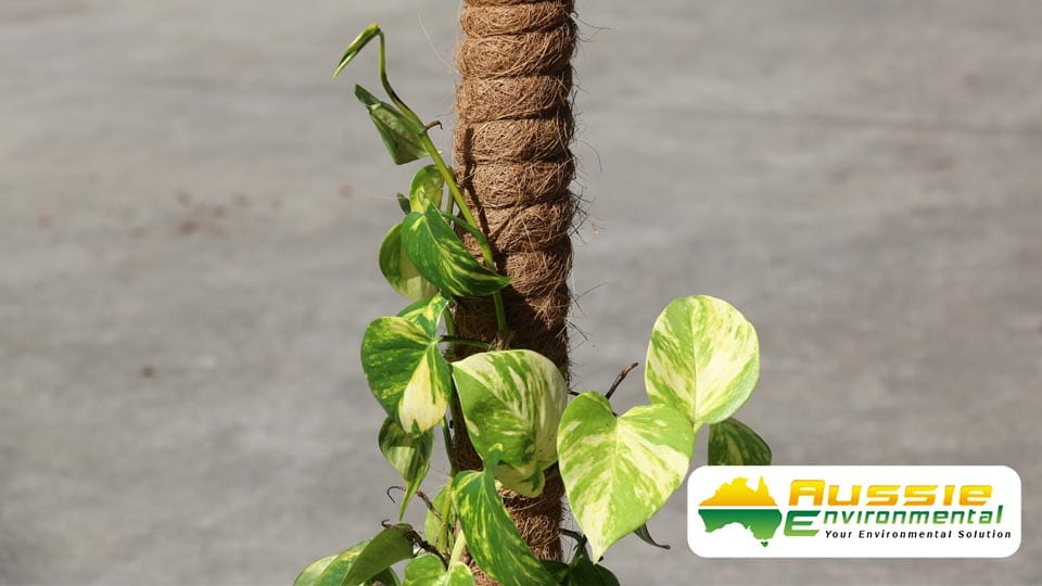 150cm plant totem pole plant support for climbing plants