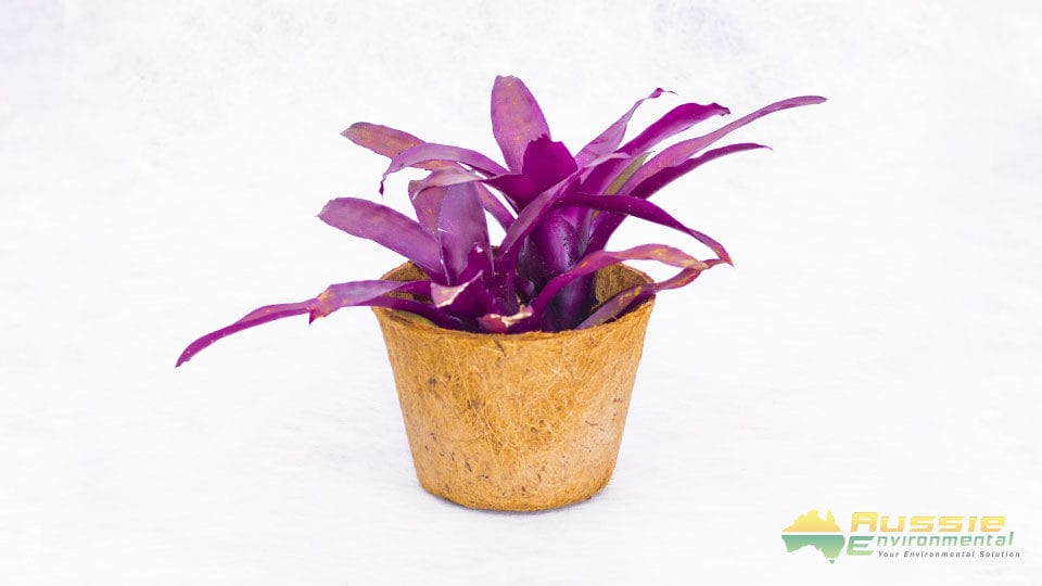 Coir Pot Mediuml Display2 1