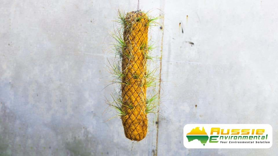 Mini Coir Log Small Great For Hanging epiphyte plants or vertical bromeliad hanging gardens