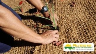 Coir Mesh 700gsm with seedling