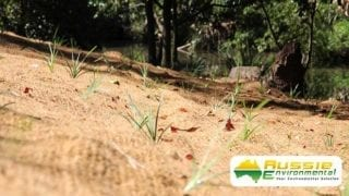 Coir Mesh Plant Shoots, Revegetation Growth