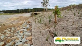 Jute mesh installation covering mulch for erosion control and revegetation