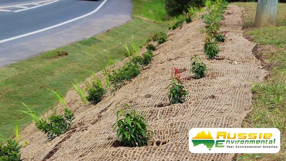 Jute Mesh Along Road Bank For Revegetation