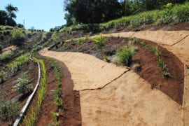 Coir Blanket for Erosion Control, landscaping & gardening projects