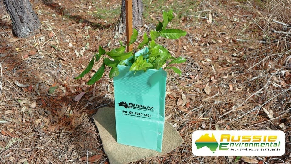 Tree Guards For Revegetation