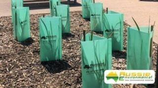Tree Guards revegetation