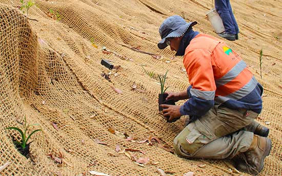 Helping The Environment [Erosion Control & Revegetation]
