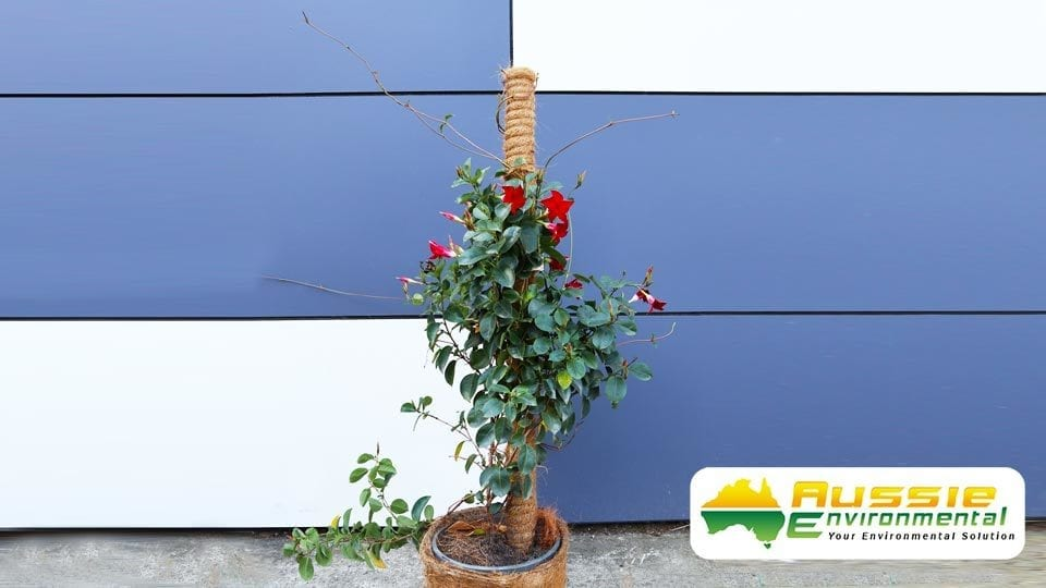 plant support moss pole