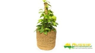 coir hand woven basket large