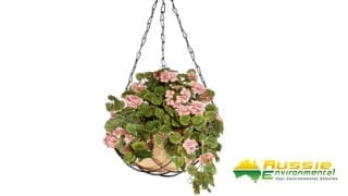 Medium Hanging Basket