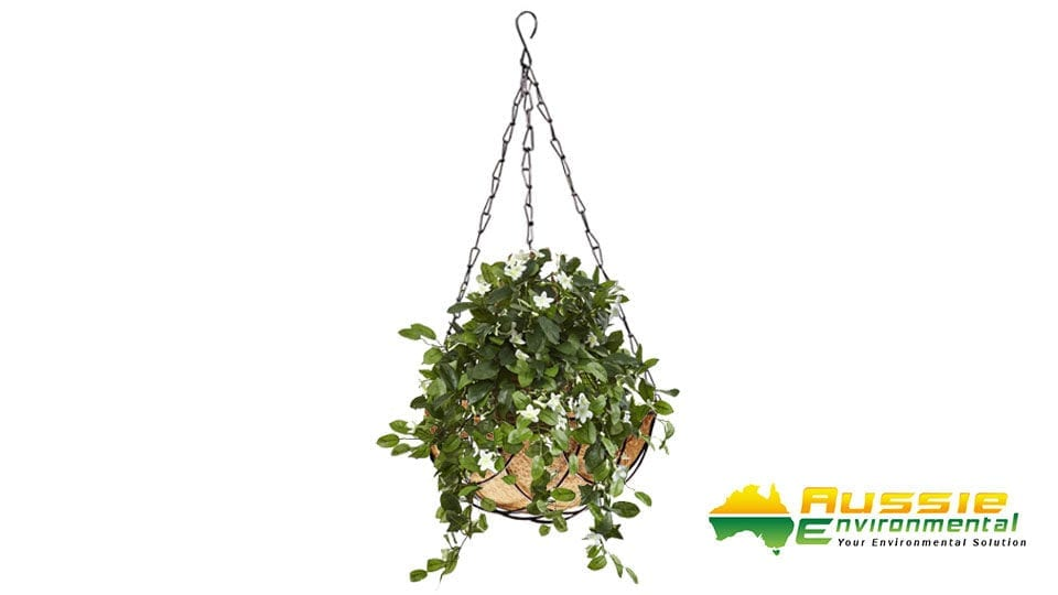 Small Hanging Baskets